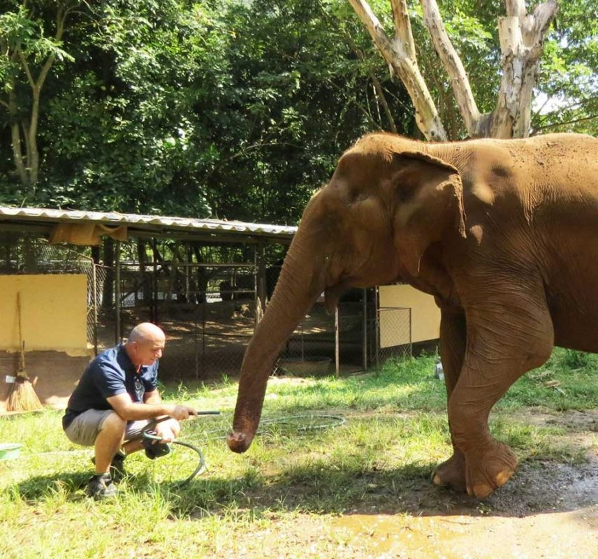 גדי משקה פילה עיוורת בחווה לשיקום פילות Elephant Nature Park בצפון תאילנד