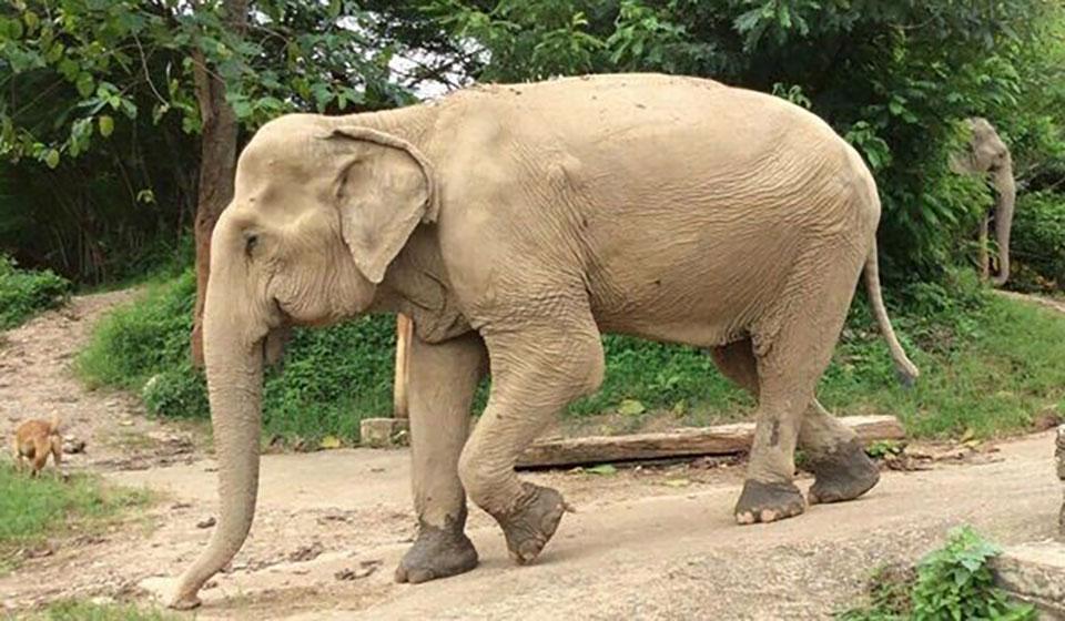נויה-נה ב-Elephant Nature Park
