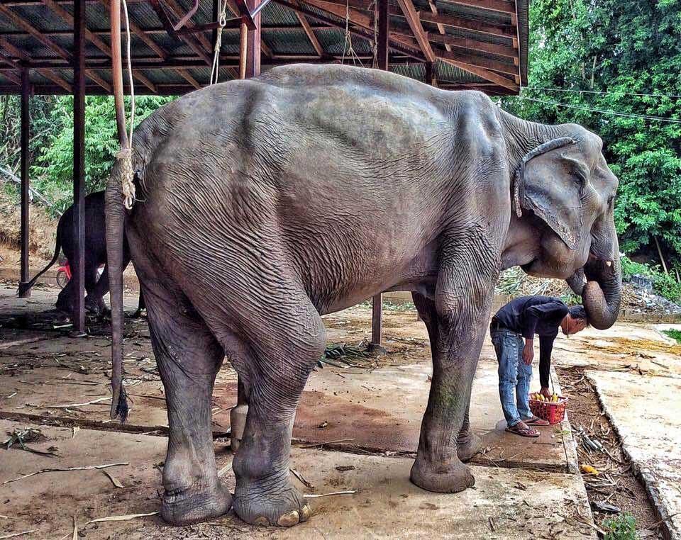 נוי-נה ביומה הראשון ב- Elephant Nature Park